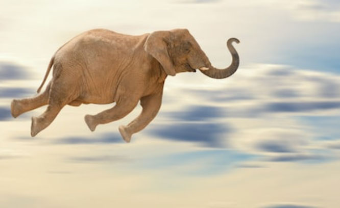 Flying Elephants and Travel Emissions